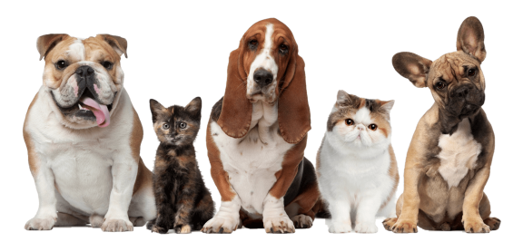 cats_dogs_trimmed_ppt_compress