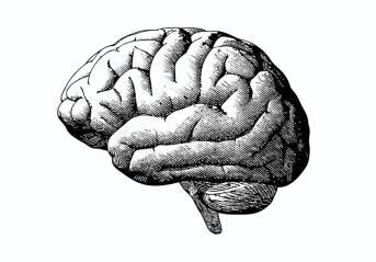 engraving-brain-black-white-bg-illustration-grayscale-monochrome-color-background-85862032